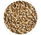 Солод светлый ячменный Pilsner malt ЕВС 2,8-4,5 (Курский солод)